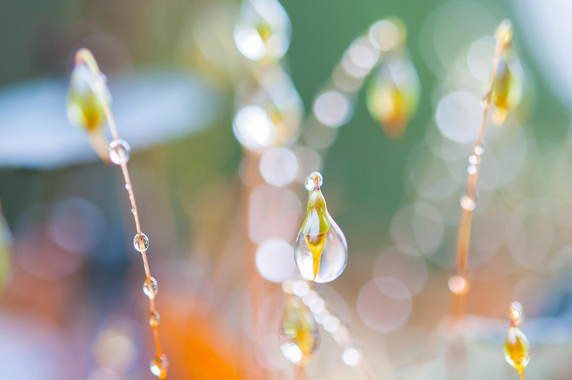 Water Drop Macro Photography